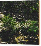 Scrubland Texas Wood Print