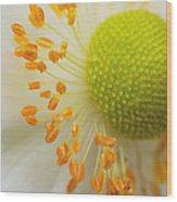 Sea Anemone Abstract Wood Print