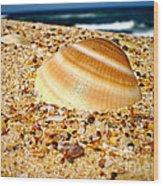 Sea Beyond The Shell Wood Print