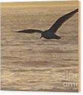 Sea Bird In Flight Wood Print by Paul Topp