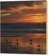 Sea Birds  Leucadia Ca  2013 Wood Print