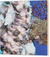 Sea Cucumbers 1 Wood Print