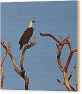 Sea-eagle And The Peewee Wood Print