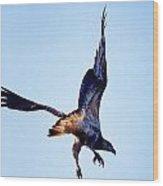 Sea Eagle Flight Wood Print