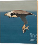 Sea Eagle With Catch Wood Print
