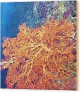 Sea Fans 6 Wood Print