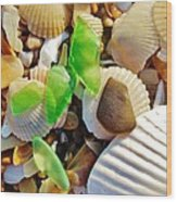 Sea Glass And Shells 17 10/2 Wood Print
