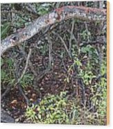 Sea Grape Jungle Wood Print