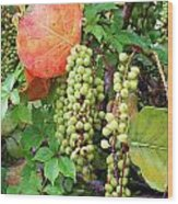 Sea Grapes And Poison Ivy Wood Print