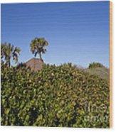 Sea Grapes On A Florida Sand Dune Wood Print