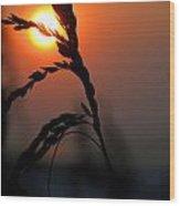 Sea Grass In The Sun Wood Print