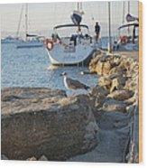 Sea Gull 1 Wood Print