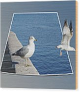 Sea Gull Away Out Of Bounds Wood Print