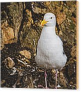 Sea Gull Wood Print