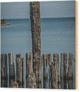 Sea Gull On A Piling Wood Print