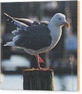 Sea Gull On Break Wood Print