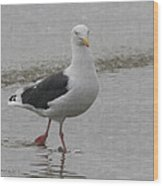 Sea Gull On The Beach At Oceanside California Wood Print
