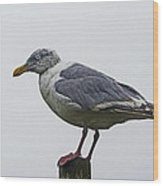 Sea Gull On The Dock On A Foggy Day Wood Print