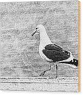 Sea Gull On Wharf Patrol Wood Print