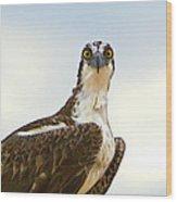 Sea Hawk Wood Print by Robert Bascelli