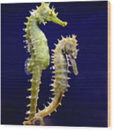 Sea Horse Wood Print by Boon Mee