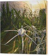 Sea Lily Wood Print
