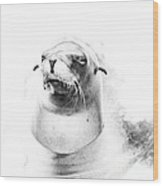 Sea Lion Abstract Wood Print