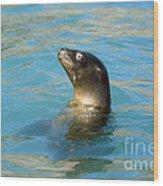Sea Lion Wood Print by James L. Amos