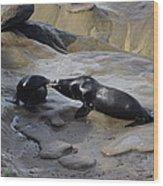 Sea Lion Kiss  Wood Print