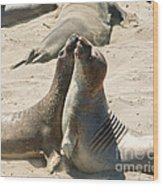 Sea Lion Love From The Book My Ocean Wood Print by Artist and Photographer Laura Wrede