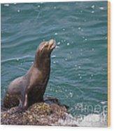 Sea Lion Posing Wood Print