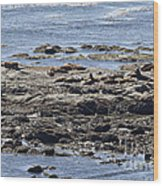 Sea Lion Resort Wood Print