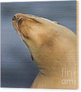 Sea Lion Stretch Wood Print