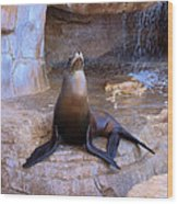 Sea Lion Wood Print