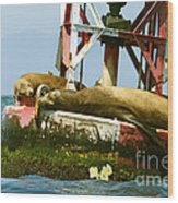 Sea Lions Floating On A Buoy In The Pacific Ocean In Dana Point Harbor Wood Print