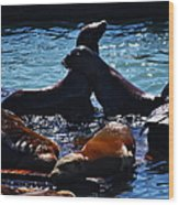 Sea Lions In San Francisco Bay Wood Print