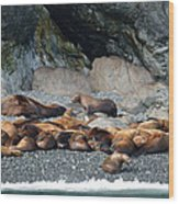 Sea Lions On The Sea Shore Wood Print