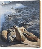 Sea Lions Seek Shelter Wood Print