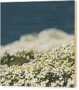 Sea Mayweed And The Sea Wood Print