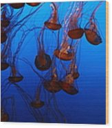 Sea Nettle Jelly Fish 5d24939 Wood Print by Wingsdomain Art and Photography