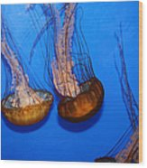 Sea Nettle Jelly Fish 5d25076 Wood Print