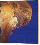 Sea Nettles V 2 Wood Print