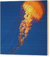 Sea Nettles V 8 Wood Print