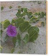 Sea Oat Purple Wood Print