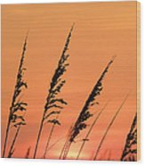 Sea Oat Sunset Wood Print by JC Findley