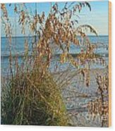 Sea Oats 1 Wood Print