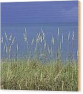 Sea Oats By The Blue Ocean And Sky Wood Print by Karen Stephenson