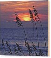 Sea Oats By The Sea Wood Print