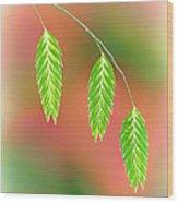 Sea Oats Grass Seedheads Wood Print