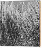 Sea Oats In The Glades Wood Print
